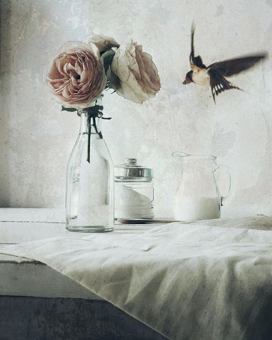 laura-silvestre-bataller-5